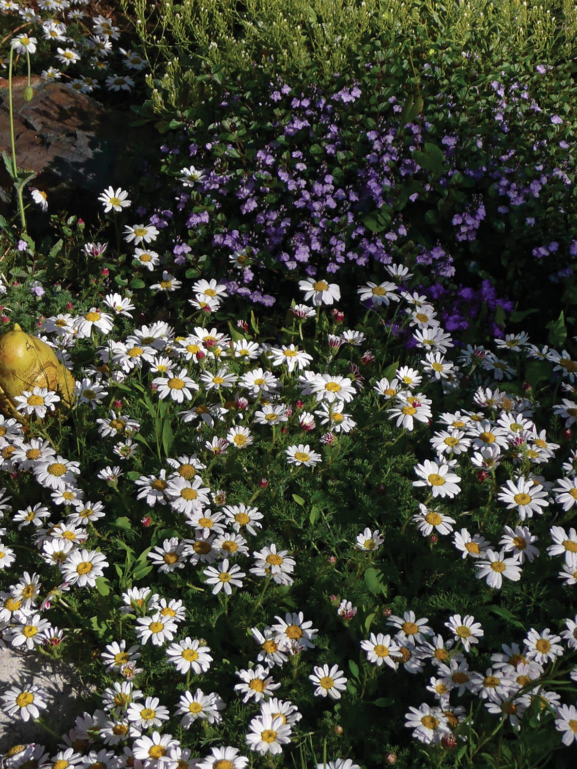 Embracing Perennials In Your Garden Tahoe Quarterly